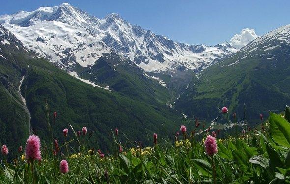 Цветы на горных вершинах