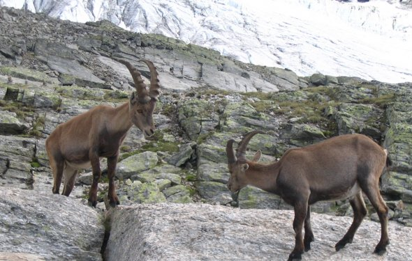 горные туры козлы